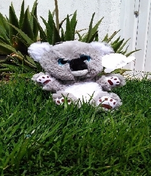 Imagen de Koala de peluche premium25 cms