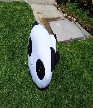 Imagen de Panda wiwi de peluche 30x35 cms